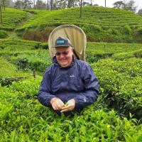 Tea Leaf Project-working 3 months in Sri Lanka