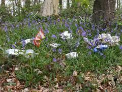 Jan 2015 Litter Picking - Histon - Girton - Oakington area