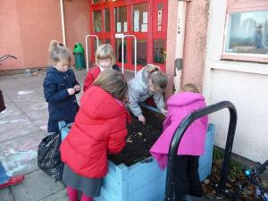 Focus on the Crocus at Dunbar Primary School