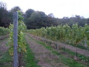 Visit to Haslemere Vineyard