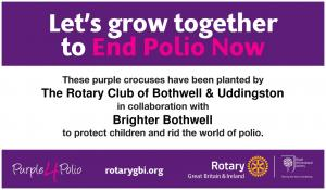 Purple Crocus Appeal -  End Polio Now
