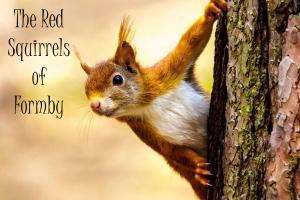 Formby Red Squirrels