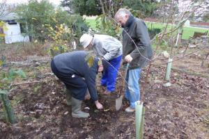 The Purple Crocus Project - Planting (21 November 2015)