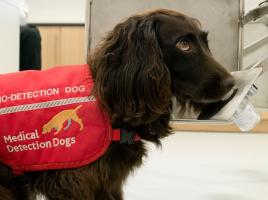 Medical / Cancer Detection Dogs