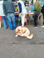 The car boot sales are dog friendly: and child friendly too -  a great morning out for the family.