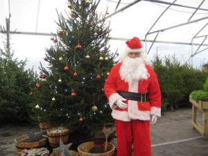 Christmas Trees for Schools