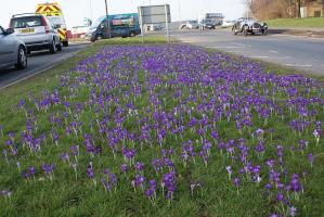 Crocus update