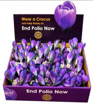 Crocus Appeal
