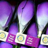 World Polio Crocus Appeal