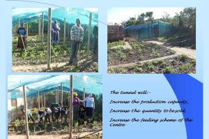A Vegetable Tunnel For Enkuthazweni Centre