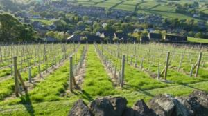 WEDNESDAY 13TH JUNE              Visit to Holmfirth vineyard with lunch.