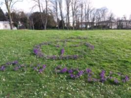 End Polio Now - Purple Crocuses