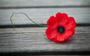 Rotary Club of Crowthorne & Sandhurst Remembers