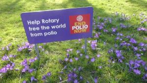 Rotary Crocus Campaign