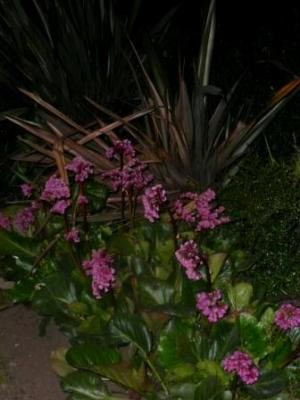 Just a couple of pictures of  our Rotary Garden by night