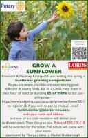 Grow a sunflower competition