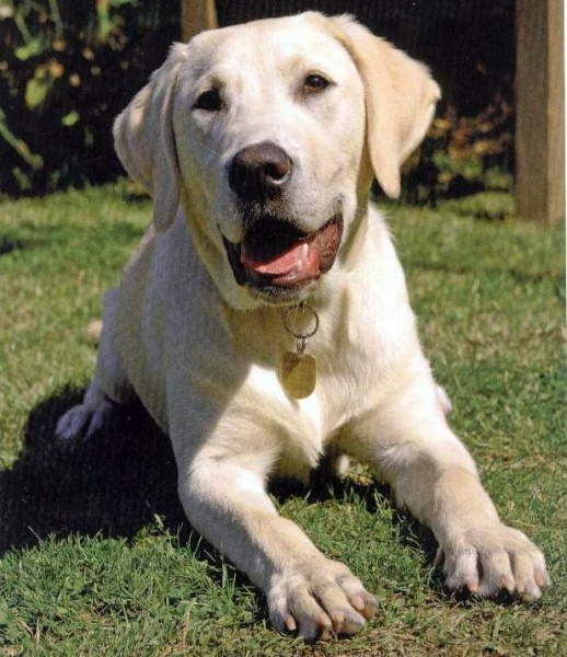 Guide Dog Training Programme