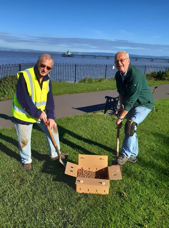 Rotary Clevedon Yeo Sea Front Crocus planting 2019