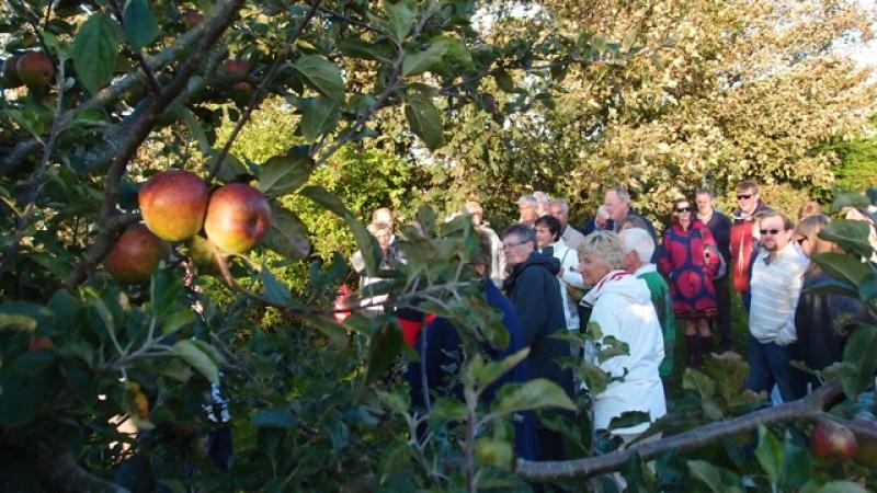 Cider Fields Tour with Gill Girard (September 2011) - Walking through the orchard