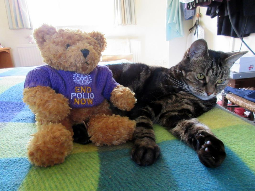 Fred Bear raising awareness and funds to end polio -