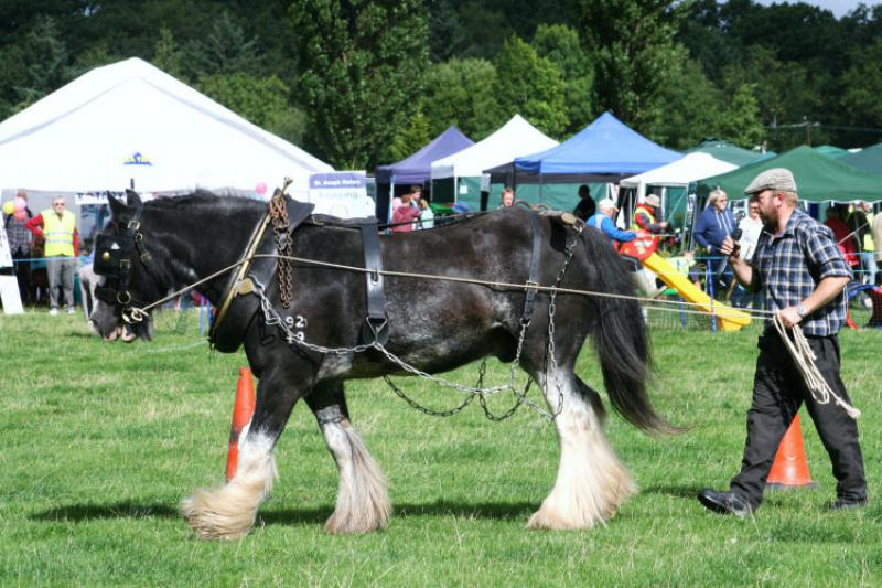 St Asaph country Fayre 2013 - 1workhorse