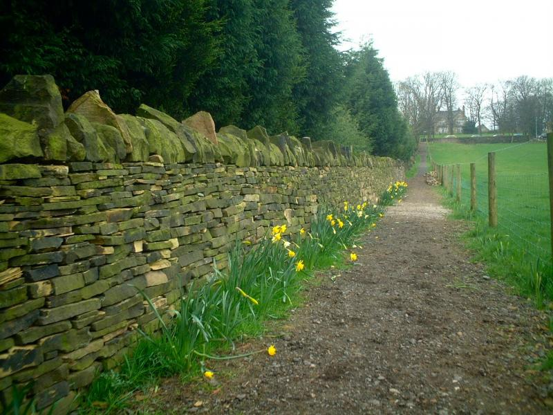Calverley Millennium Way - The completed dry stone wall built by club members