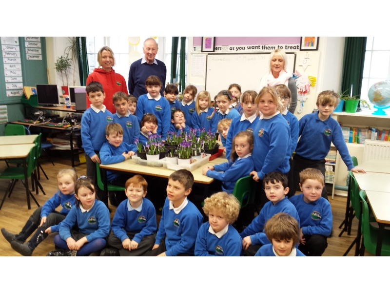ABOUT Rotary Keswick - Threlkeld primiary schoolchildren learn about the End Polio now campaign and grew purple crocuses to symbolise the purple thumbs given to children after immunisation