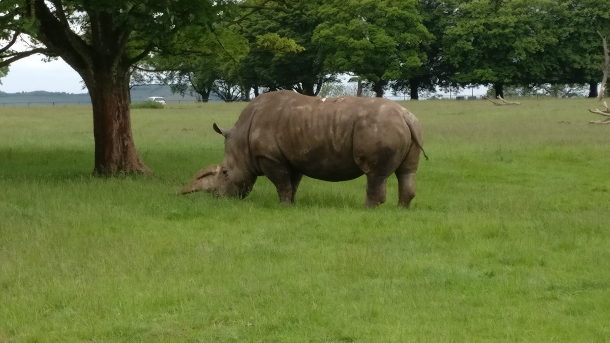 Kids Out day to Whipsnade Zoo - 2019-06-12 13