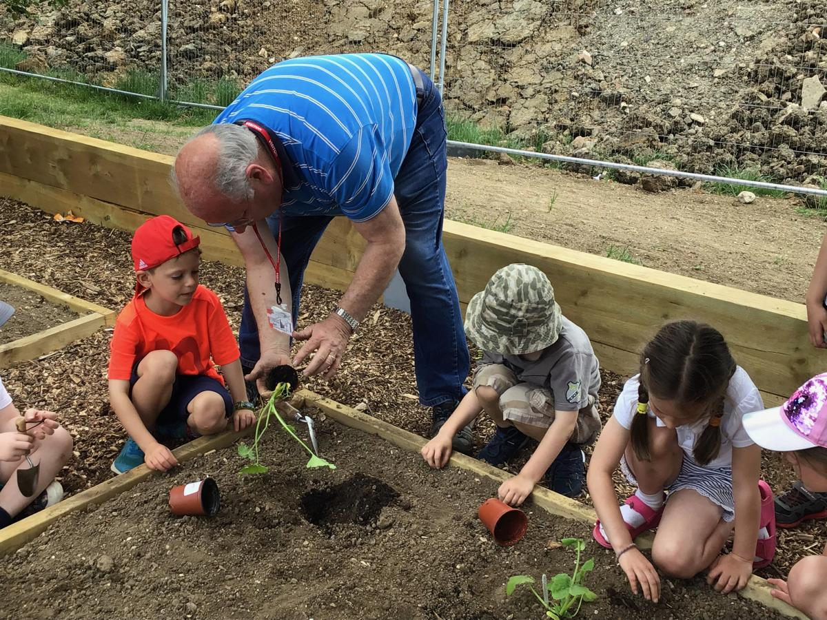 Vegetable Garden at St Mary's School -