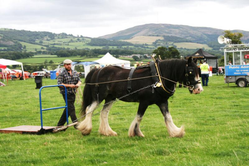 St Asaph country Fayre 2013 - 3workhorse