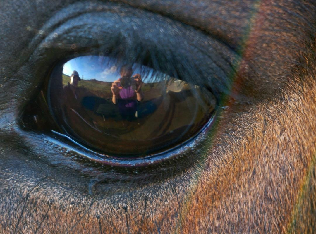 2016-17 Young Photographer Competition Results - Truro Prep School, RC of Truro - This photo is of our horse's eye reflecting me taking the picture and my dad standing beside.  I got the inspiration to doing the horse eye is because they are such lovely animals and really beautiful