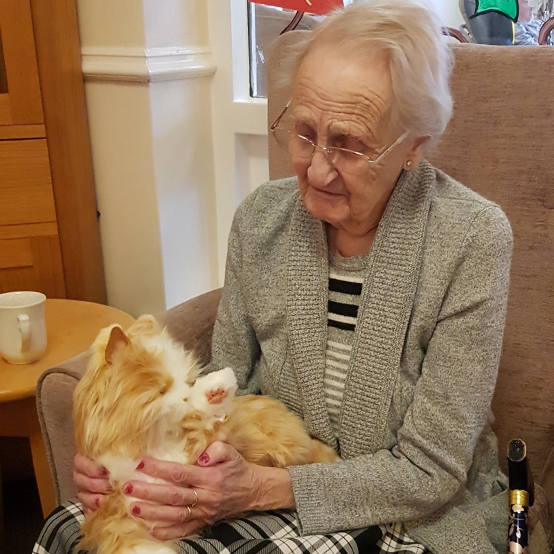 Robotic Cat Companions - Cuddles is a big hit with all the residents