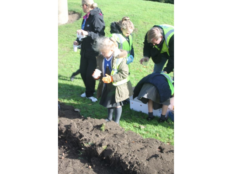 2017 Purple 4 Polio - End Polio Now - Bishop Auckland Rotary Club Crocus Planting 2017 05