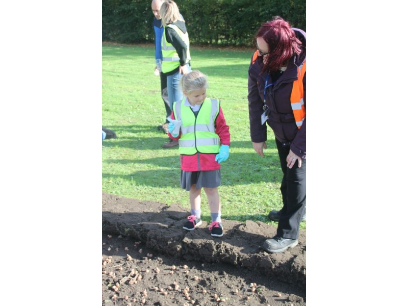 2017 Purple 4 Polio - End Polio Now - Bishop Auckland Rotary Club Crocus Planting 2017 09