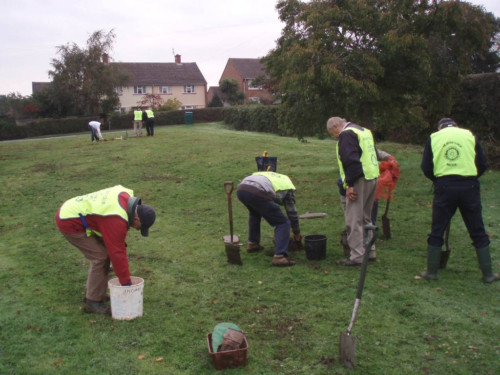 Bulb planting in Nailsea - Club members hard at work