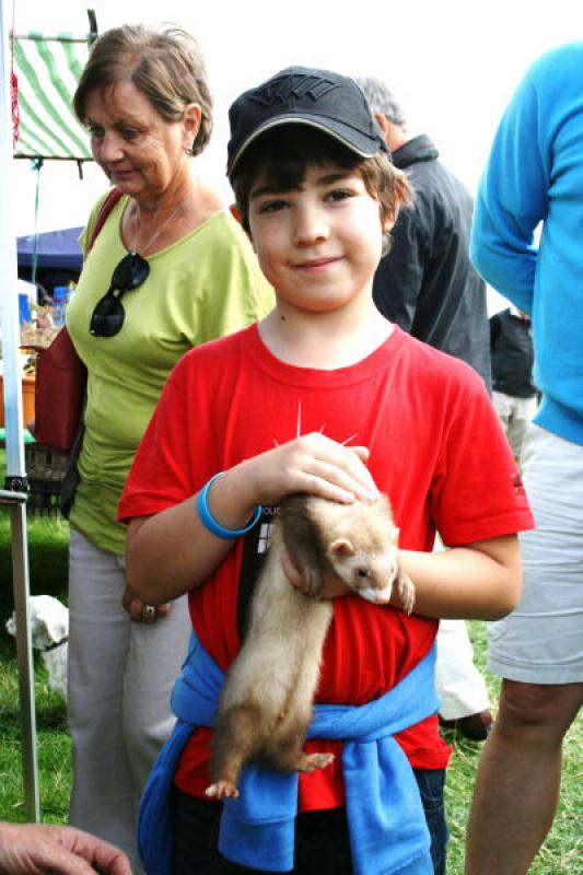 St Asaph country Fayre 2013 - CHILD-FERRET