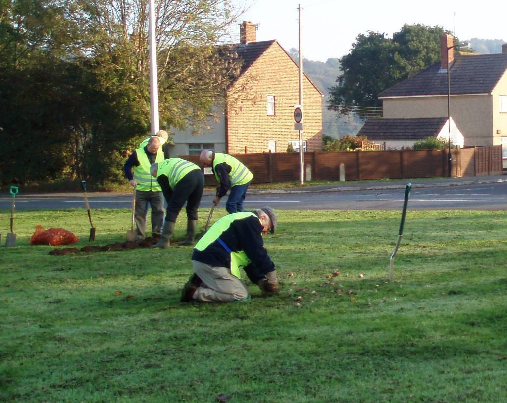Bulb planting in Nailsea - Club members still hard at work.