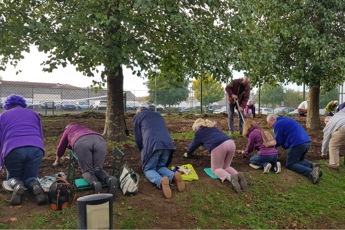 DG's Newsletter - November 2018 - Rotarians hard at work planting 25,000 Crocus Corms