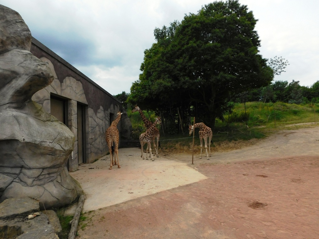 Kids Out Trip to Chessington -