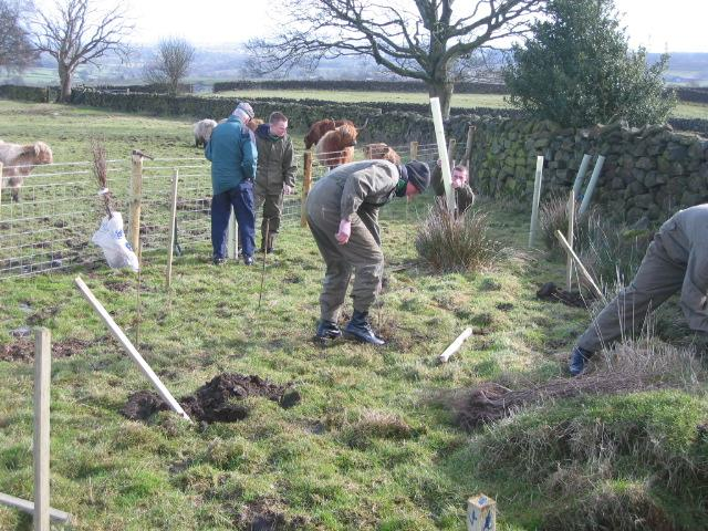 Trees For Nidderdale (Carbon Offset) -