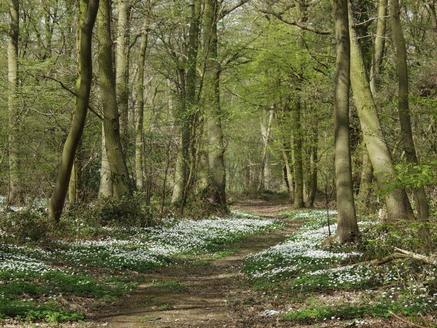 Around our District - Tiptree Wood