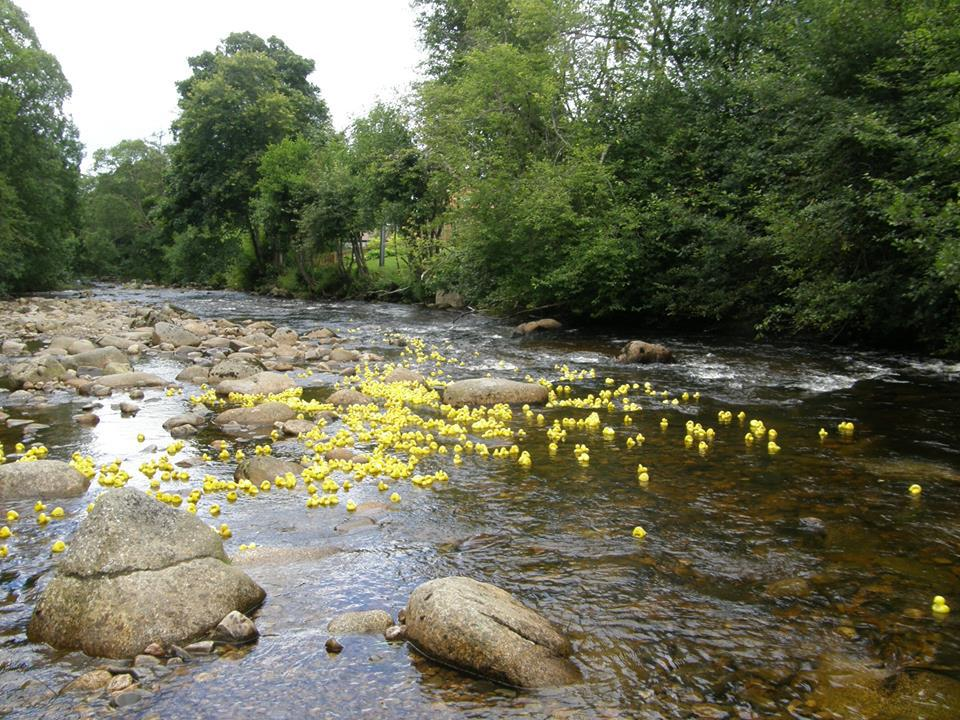 Recent Club Activities - We raise funds at our Annual Duck Race