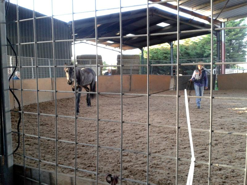 Outside Visit - Equine Pathways - Goochy being trained by Carole