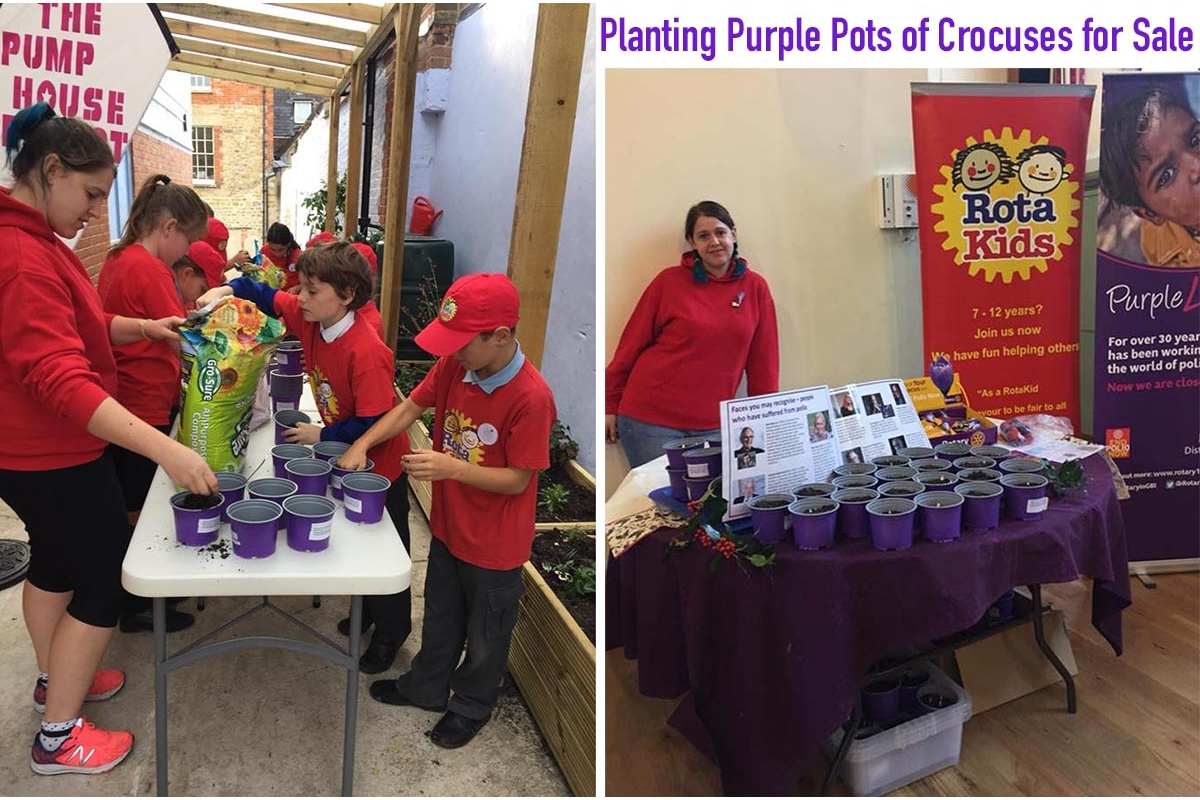 The Big Crocus Plant 2017 is underway! - The RotaKids at the Pumphouse Project planted up scores of purple pots with crocus corms to be sold at The Country and Apple Day markets