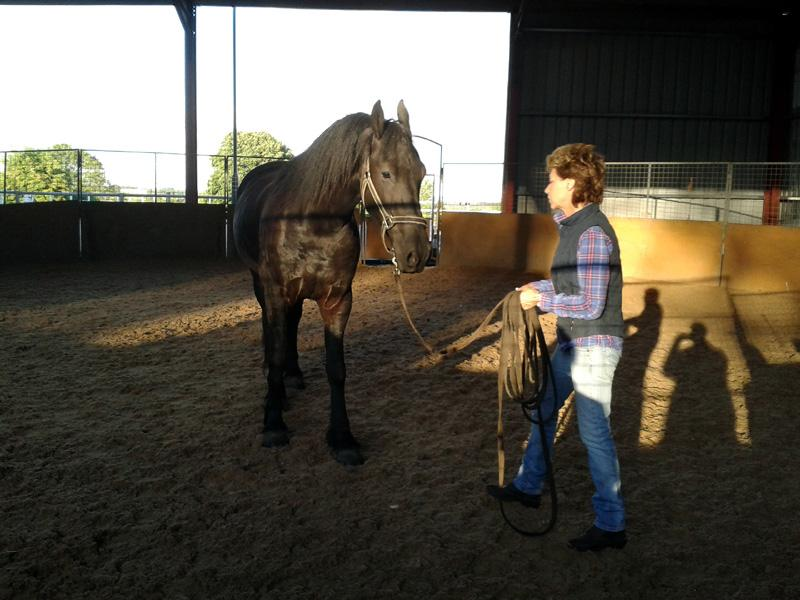 Outside Visit - Equine Pathways - Carole and Goochy