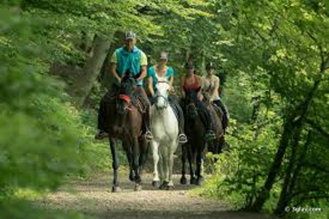 ROTARY AMBER VALLEY ANNUAL CHARITY HORSE RIDE  -