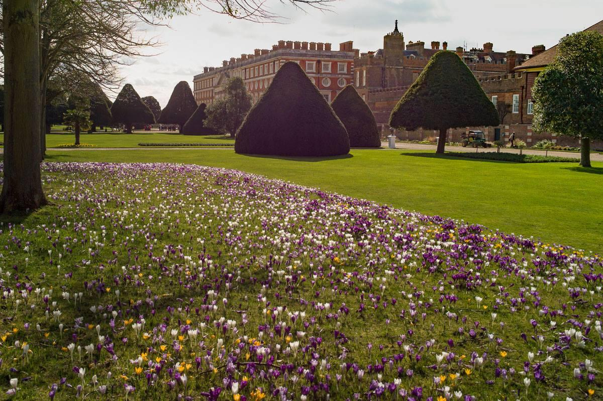 Polio Eradication - Mixed with their existing display, our deep purple crocuses standout in this great location.