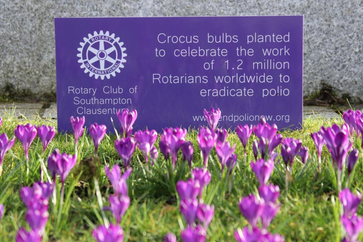 Crocus Planting at Vokes Memorial Garden in Southampton - The sign says it all