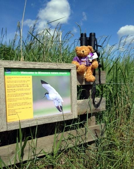 Fred Bear raising awareness and funds to end polio - Enjoying a day of bird watching at RSPB Minsmere, Suffolk