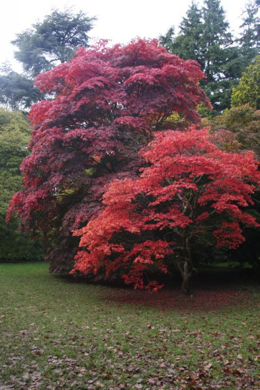 Westonbirt Walk - no gnomes in this tree, but what a sight